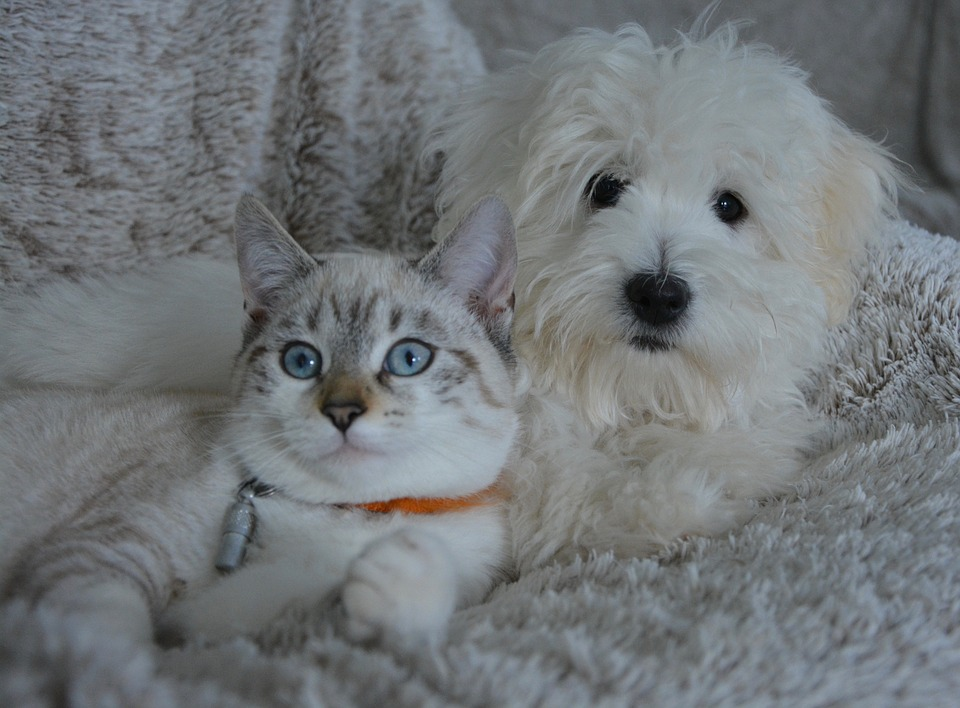 small white dog and cat laying on a comfortable fleece blanket